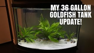 All About My Goldfish Tank! | Tank Update by Emma Lynne Sampson