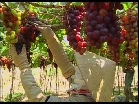 Đẩy mạnh xây dựng thương hiệu nông sản Việt Nam gắn với phát triển thị trường trong nước
