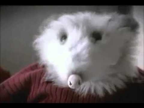Animal Intervention: Amos the Opossum (banned commercial)