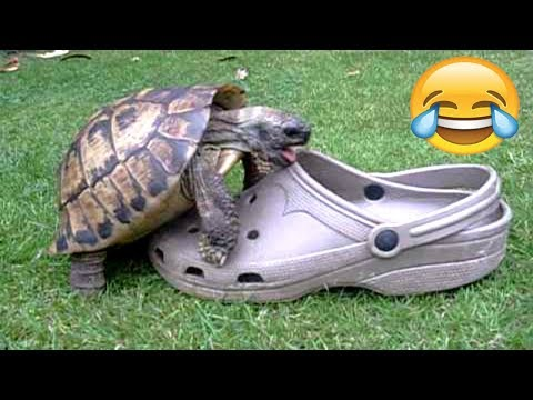 FUNNIEST TURTLES - Cute And Funny Turtle / Tortoise Videos Compilation [BEST OF 🐢]