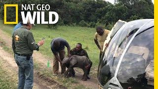 Baby Elephant Takes a Helicopter Ride | Nat Geo Wild by Nat Geo WILD