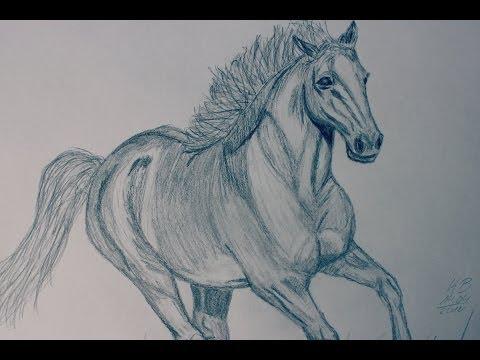 Pferd zeichnen- Time lapse