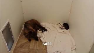 Video The Rescue of a homeless dog and her newborn babies MP3, 3GP, MP4, WEBM, AVI, FLV Juli 2019
