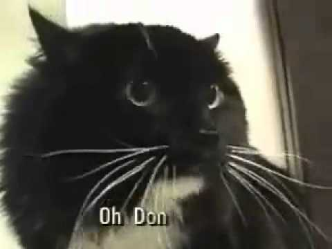 Talking Cat Speaks In Riddles