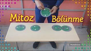 Karton eva ve ip kullanarak mitoz bôlünme modeli yapma