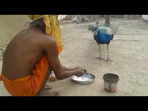 Video Bharuha sumerpur hamirpur hardol lala mandir ke download in MP3, 3GP, MP4, WEBM, AVI, FLV January 2017