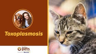 Dr. Becker on Toxoplasmosis