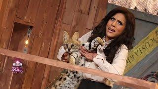 Francisca se encargó de la plaga de gatos salvajes