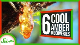 6 of the Coolest Things We've Found in Amber by  SciShow