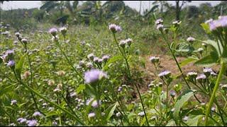 Cách để cỏ và tưới nước trong mùa khô