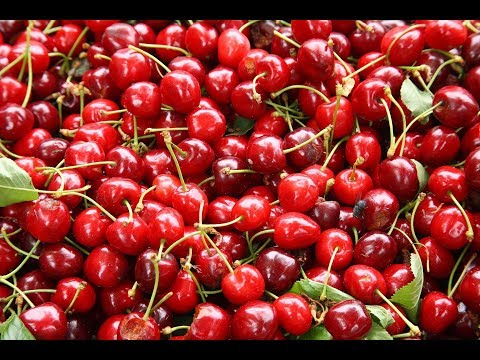 Tart Cherry Juice | Melatonin, Sleep Quality, Sleep Efficiency, Total Sleep Time, Total Time In Bed