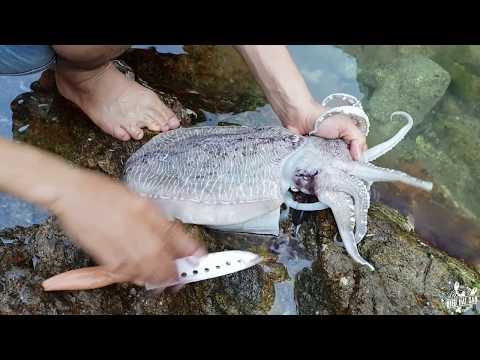 Rất hay: Review câu cá và nướng mực tại đảo - Thời lượng: 35:02.