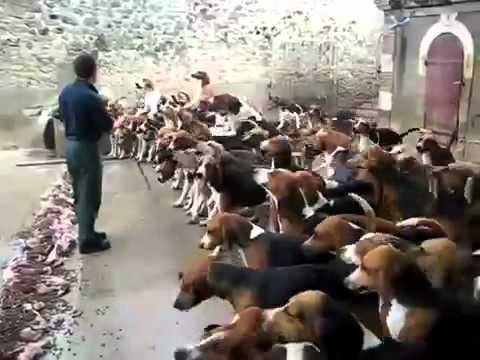 超驚人的狗狗餵食秀,太壯觀了吧!!