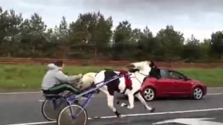 Illegal Traveller's Horse Race On Irish highway