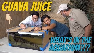 What's in the Box Challenge Gets Juicy with Reptiles by Prehistoric Pets TV