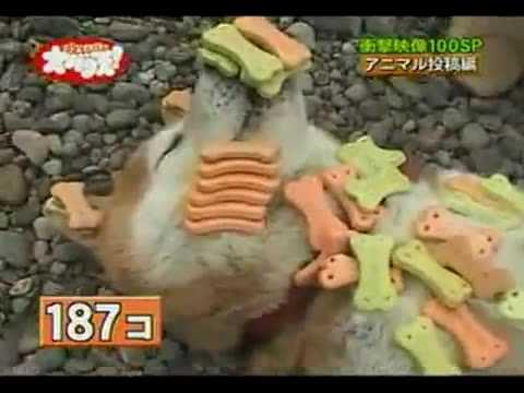 史上最好笑的動物節目,挑戰寵物的忍耐極限!