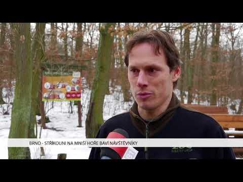 TV Brno 1: 26.1.2017 Stříkouni na Mniší hoře baví návštěvníky.