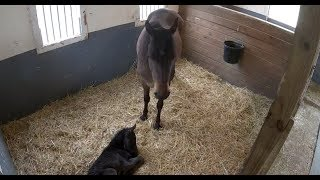 Mama Horse & 1-day-old foal relaxing | The Dodo LIVE by The Dodo