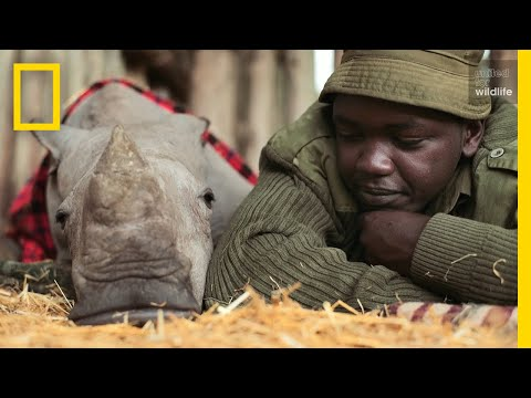 Meet the Heroes Who Protect the Last Northern White Rhinos in the World (2017)