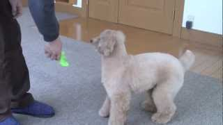 Dog Training 10