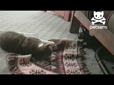 il-cucciolo-il-gatto-e-il-tappeto-281