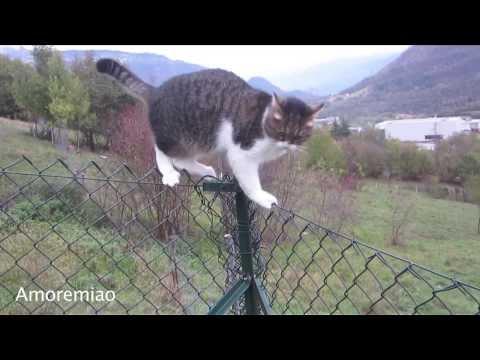 un gatto equilibrista!
