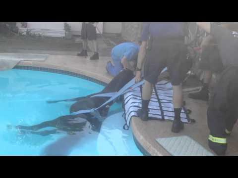 YouTube: dramático rescate de un caballo que cayó a la piscina