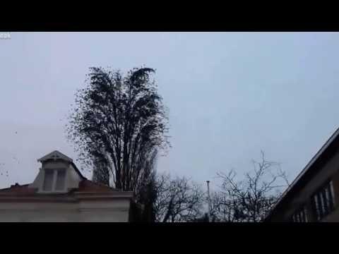 ptaki-i-drzewo