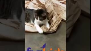 """Furkids kitties say """"THANK YOU FOR THE GIFTS""""!"""