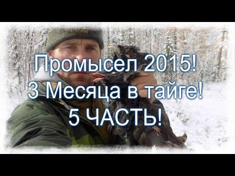 5 Часть . Промысел в тайге 2015 ! Охота на глухаря. (видео)
