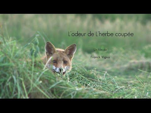 odeur - Réalisé en Lorraine, ce documentaire donne la parole à tous les acteurs de la vie de renard. Un piégeur, un chasseur, un scientifique, un naturaliste et deux...