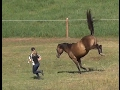 Fun in the pasture with the horses!