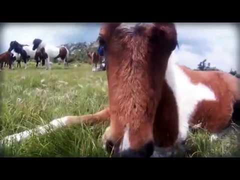 Wild horses on the Appalachian Trail!