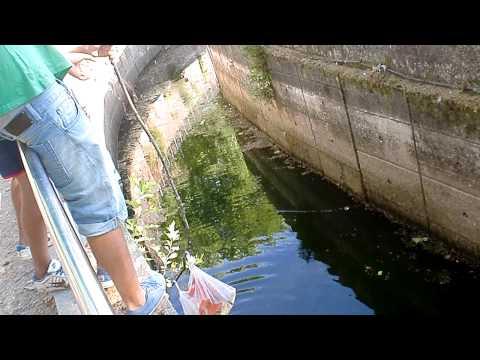 Pescando ranas(intentándolo)