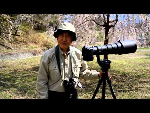八ヶ岳南麓で野鳥と桜の花の撮影の仕方 видео