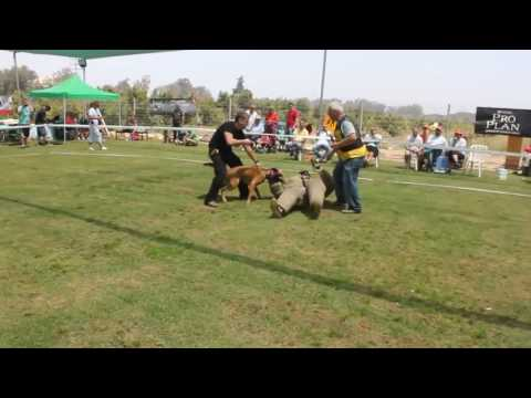 Video Hermiona 4 of 4 fastest ever recorded strike download in MP3, 3GP, MP4, WEBM, AVI, FLV January 2017