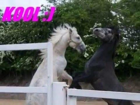 Video horses xxx download in MP3, 3GP, MP4, WEBM, AVI, FLV January 2017