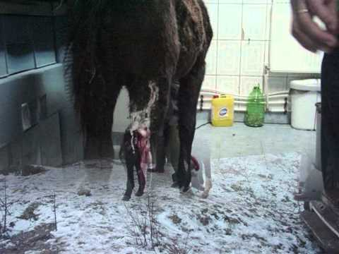 comment soigner son cheval equideow