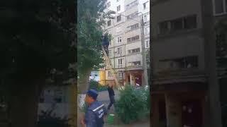 У Миколаєві вчора з дерева зняли «малого альпініста». Відео