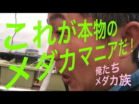 メダカマニア宅へ突撃!視聴回数激増必至シリーズ第2弾!