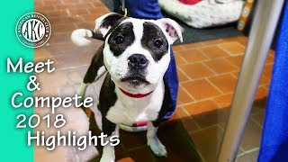 Meet and Compete 2018 - AKC Meet the Breeds & Masters Agility Championship Highlights
