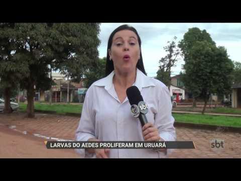 SBT PARÁ (01.03.2017) Larvas do Aedes proliferam em Uruará