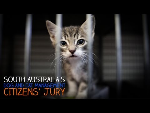 Citizens' Jury on Dog and Cat Management - part 1: Introduction