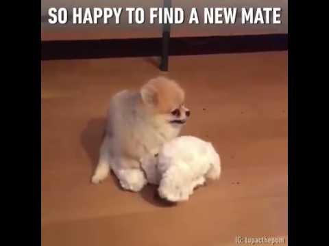 -gdy-pies-znalazl-w-koncu-kompana-do-zabawy