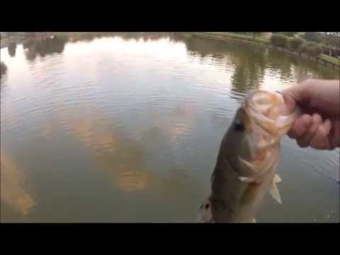 Big Ugly Black Largemouth Bass – Pond Fishing