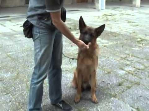Centro cinofilo - Passion for Dogs