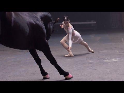 Kafkas Müziği ile Dans Eden At