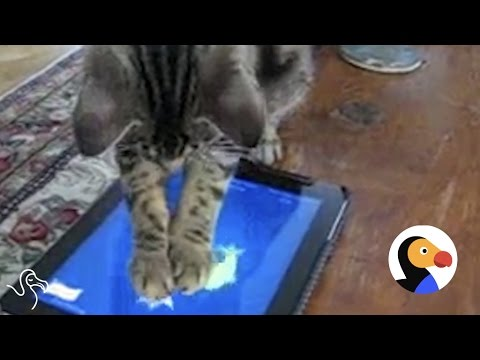 Watch Out, These Cats Will Beat Your High Score on Your iPad