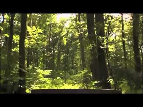 Der Naturpark Habichtswald: Von Märchen Mystik und  ...