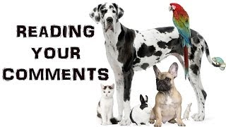 DO YOU HAVE PETS? | Reading Your Comments #27